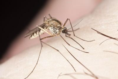 Komáři dokážou léto pořádně znepříjemnit