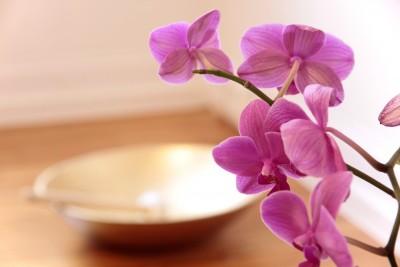 orchidej-bytovy-interier-pestovani-v-kvetinaci